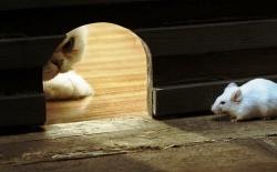Belajar dari Ambisi Seekor Kucing