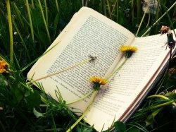 Budaya Baca Tulis